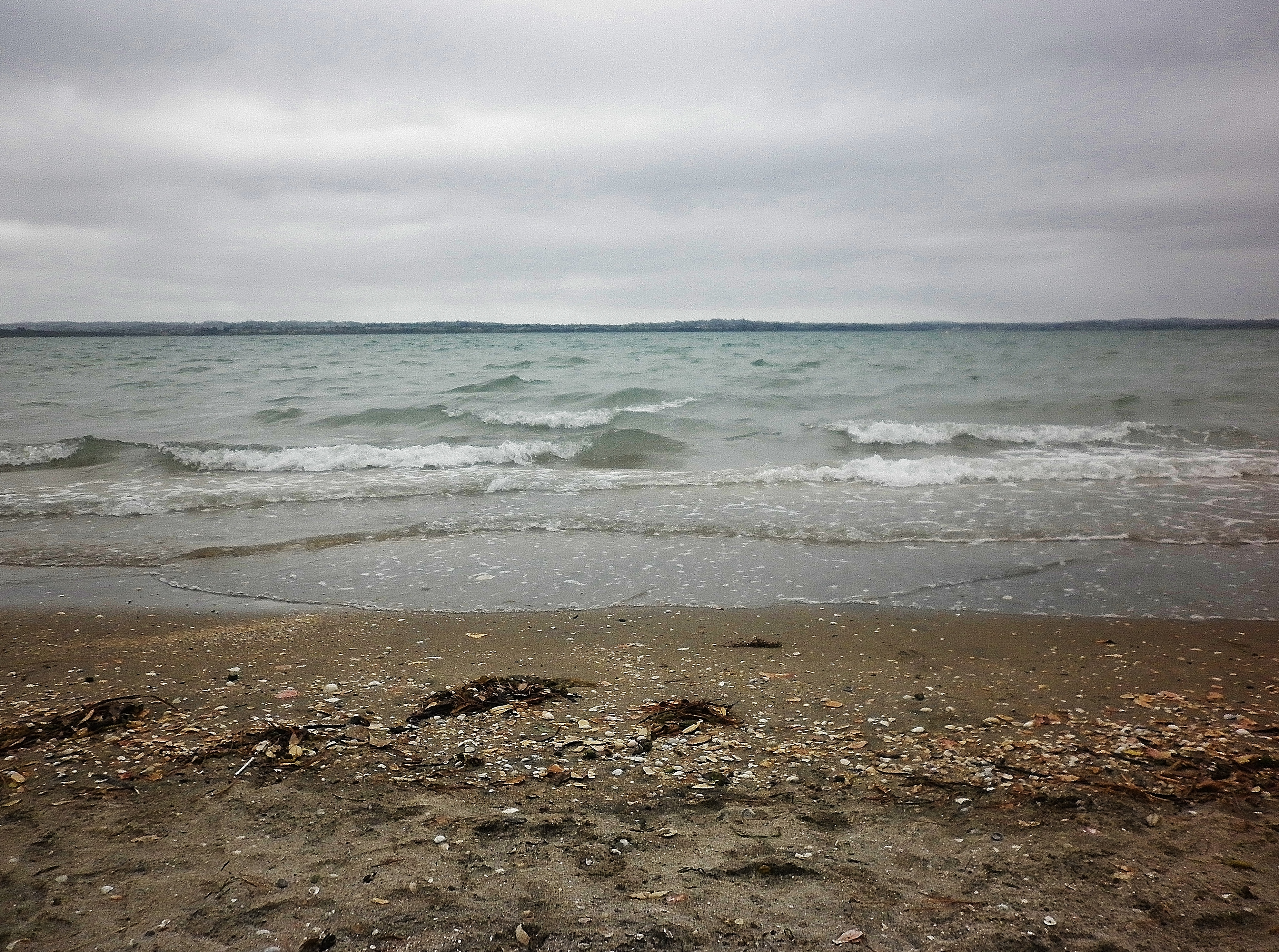 Pt Chevalier Beach A Beach A Day Page 2